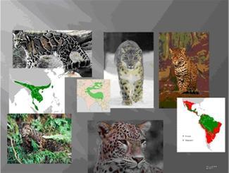 Spesies en sub-spesies